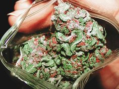10/30/14 The debate over the health benefits of cannabis has been raging for years. The Rescheduling of Cannabis May be Imminent as Assistant U.S. Attorney Gives Evidence on its Medical Benefits in Landmark Trial. Read more....