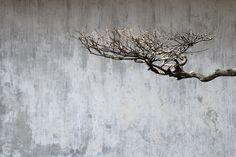 artreats: darksilenceinsuburbia: Luca Lupi. Giardino (Garden), Shanghai. falling storm ~ rising tree