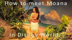 KennythePirate, KtP, Disney World, Disney World Crowd Calendar, Disney World planning info, Disney World character meet and greets, character palooza, Disney character interaction, Disney World touring plans, Disney World refurbishments