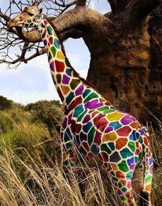 Its not a baby giraffe sarah.its a rainbow giraffe! Baby Animals, Cute Animals, Colorful Animals, Colorful Food, Safari Animals, Wild Animals, Foto Poster, Over The Rainbow, Belle Photo