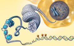Major epigenetic metastasis-supressor identified for breast cancer.