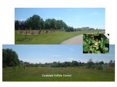Coaldale Edible Forest Project