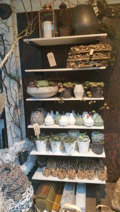 Sølvbergetblomster