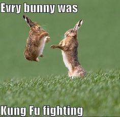 funny bunnies