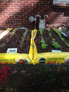 Saw horses, cross pieces, Miracle Grow... Voila! We have eight bags, with peppers, lettuces, brussels sprouts, butternut and yellow squash, radishes, onions, beans and peas. Tomatoes are in containers on the ground.