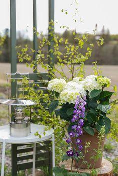 Magisk stemning og mai-feiring i hagen! Pergola, Fruit, Lady, Plants, Outdoor Pergola, Plant, Planets