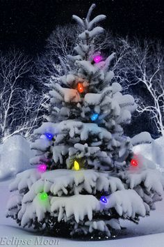 30 Free Christmas Tree Gif Animations Your Have Never Seen Christmas Tree Gif, Christmas Scenes, Merry Christmas And Happy New Year, Christmas Pictures, Winter Christmas, Christmas Lights, Christmas Holidays, Christmas Decorations, Outdoor Christmas