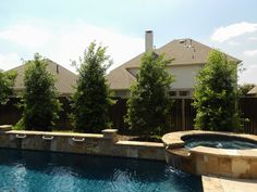 Large Eagleston Hollies provide beautiful year round color for this backyard and pool area. // Image from Treeland Nursery