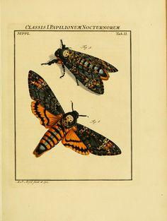 D.3,pt.1 - De natuurlyke historie der insecten; - Biodiversity Heritage Library