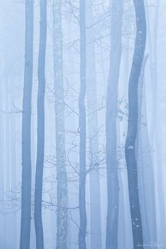 earthdaily: The Unexpected by Andreas Resch Light Blue Aesthetic, Aesthetic Pastel, Bohinj, Alice Blue, Blue Rain, Cerulean, Periwinkle, Lilac, Shades Of Blue
