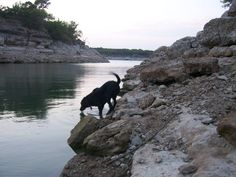 Austin has a multitude of off-leash dog parks, some with fenced areas and some with wide open spaces.