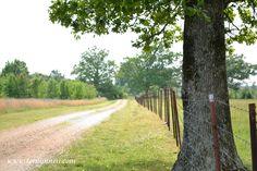 country lane - Google Search