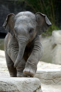 Cute Baby Elephant cute animals baby elephant wildlife zoo