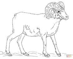 Image result for ram animal side view