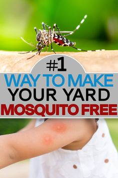 Diy Mosquito Repellent, Mosquito Trap, Mosquito Repelling Plants, Insect Repellent, Front Yard Flowers, Natural Insecticide, Golf Tips Driving, Garden Pests, Pest Control