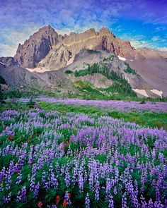 Canyon Creek Meadow by Bend, Oregon Photographer, Mike Putnam ~I can only imagine how fresh the air would be, and how wonderful it would smell.
