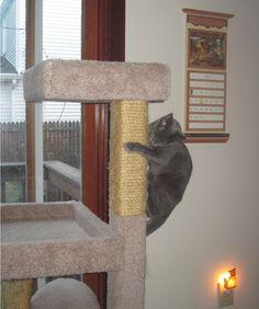 Nadia Climbing Cat Tree #cattrees - Make your cat happy - Catsincare.com!