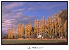 Photo taken with Pentax film camera| Farm in Grand Junction | Jurgita Lukos Photography