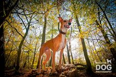 Pet Photography Tips: Getting the Perfect Picture of your Pooch - Photoshop Training UK