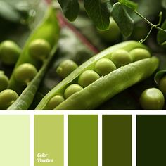 The calm palette that expresses the absolute poise. Shades of green are beneficial to the state of mind and the mind. This color can be surrounded by not j.