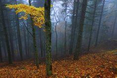 Serra da Estrela, Portugal Retratos da floresta portuguesa - PÚBLICO
