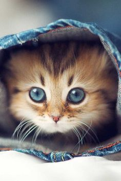 I love cats, and this kitten is adorable!!!