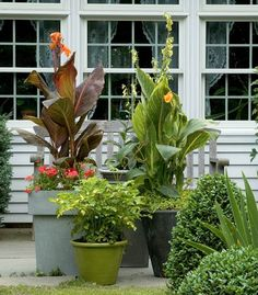 Containers of varying sizes, colors, textures and shapes can be grouped together for a pleasing overall effect.