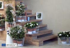 White Fragrant Plants Thejoyofplants.co.uk