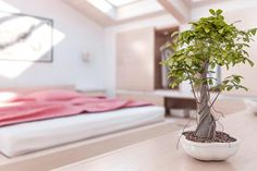 Aplicar el Feng Shui para mejorar el flujo energético de tu hogar puede ser fácil, si te inicias con los conceptos básicos y poco a poco, avanzas hacia las técnicas más complejas. #FengShui #Ideas #Decoración #Tips