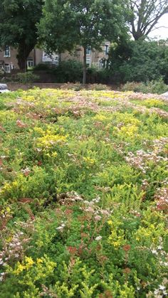 Sedum roof attracts bees and butterflies, when seen through the upper floor window links the house to the garden and hides an ugly asphalt roof.