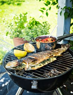 Kala, Bbq, Fish, Recipes, Barbecue, Barrel Smoker, Pisces, Recipies, Ripped Recipes