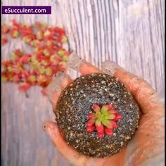 Succulent Wall, Succulent Arrangements, Succulent Terrarium, Succulents Online, Rare Succulents, Best Indoor Plants, Herb Pots, Gardening Supplies, Garden Gifts