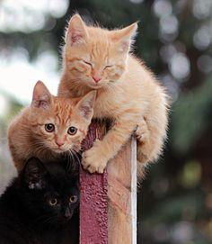 Que trio mais fofinho!