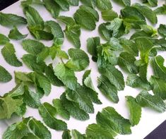 3 Easy Methods for Drying Mint Leaves for Tea - DryingAllFoods Drying Mint Leaves, Mint Tea, Dry Leaf, Easy, Plants, Health Articles, Stress Relief, Happy Life
