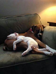 Sofa puppy pile...