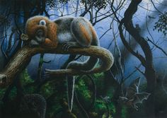 Ida (Darwinius masillae) asleep in the rain forest, in what is Germany today. Look closely in the background, there are other animals hidden there . Primates, Mammals, Extinct Animals, Prehistoric Creatures, Fossils, Illustration Art, Illustrations, Artwork, Painting