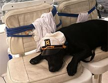 Sea Tow News - Dog Days of Summer:  Boating with Dogs - Safety Tips:  1. Bring plenty of water and a bowl to put it in. Boaters usually remember to pack fresh water for a day of boating, but most dogs don't drink from a bottle. Bring Rover his own bowl, and don't forget to refill it frequently....