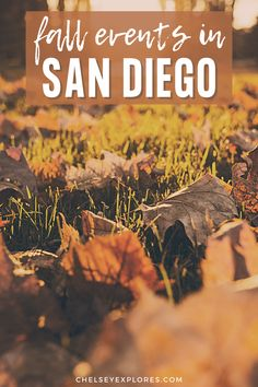 This guide to San Diego in the fall includes the best fall events in San Diego and 10 of the best things to do in San Diego in fall. Get a taste of fall in San Diego with this list of the best fall activities in San Diego California.   best things to do in san diego in the fall   san diego pumpkin patch   pumpkin patches in san diego   san diego things to do in fall   san diego in the fall   san diego fall activities San Diego Activities, San Diego Events, San Diego Travel, Autumn Activities, Travel Guides, The Good Place, Places To Go, Things To Do, California