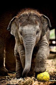 adorable éléphanteau