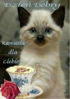 Good Afternoon, Good Morning, Kitten Wallpaper, Weekend Humor, Bday Cards, Emoticon, Reaction Pictures, Cat Art, Funny