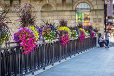Jak ukwiecić mosty? Skrzynie kwiatowe do zadań specjalnych - Inspirowani Naturą Flower Boxes, Flowers, Cities, Sidewalk, Decor, Plants, Window Boxes, Decoration, Planter Boxes