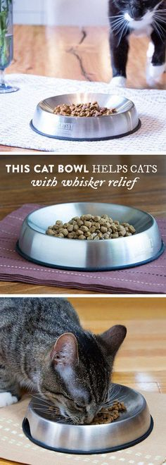 Does your cat throw food on the floor? Give your feline something to meow about. This bowl's design curbs whisker fatigue, which can make your cat a happier, tidier eater.
