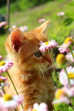 "* * "" 'Purdy flowers. I wantz one to chew on, but don'ts wanna catch hell from me human."""