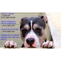 please educate yourself on pit bulls...