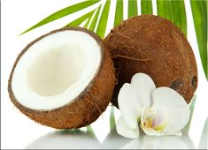 Aceite de Coco Propiedades Curativas