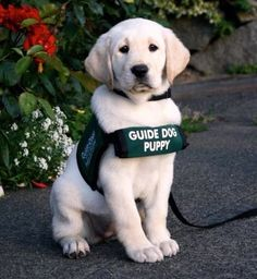 When customers with guide dogs come in. Ask them if there is anything they need help with. bring a bowl of water for the dog. Be sure to be alert for any help that the customer might need.