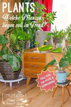 Tolle Trendpflanzen und Pflegetipps für Monstera, Pilea, Leuchterblume, Folrellenbegonie, Aralie und Co! [beinhaltet unbezahlte werbung] Zimerpflanzen für deinen Urban Jungle ! #urbanjungle #zimmerpflanzen #plants #pflanze #plantlover #pflanzenliebe #monstera #pile #begonie #zimmeraralie Survival Blanket, Homemade Muesli, Mixed Nuts, Small Furniture, Bohemian Living, Trends, No Carb Diets, Eating Plans, Fresh Herbs