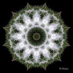 Mandala ''Hundehaare in de Wiese'' von Kreatives by Petra    #kreativesbypetra #Mandala #mandalaart #Natur #nature #fotografie #photography #naturfotografie #naturephotography #makro #macro #makrofotografie #macrophotography #Spiegelung #Spiegelungen #abstrakt #Abstract #Reflexion #Hund #dog #haare #hair #adobephotoshop #photoshop #canon #CanonEOS #farben #colours #Leinwand #jackrusselterrier Mandala Art, Petra, Canon, Dandelion, Photoshop, Flowers, Plants, Mandalas, Macro Photography