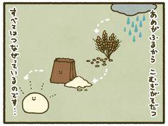 週刊こむぎ (28) 雨が降るから こむぎがそだつ   マイナビニュース