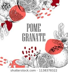 For cooking, cosmetic package design, medicinal herb, treating, healt care. Engraving Illustration, Graphic Illustration, Kiwi Bird, Cosmetic Packaging, Medicinal Herbs, Pomegranate, Photo S, Packaging Design, How To Draw Hands